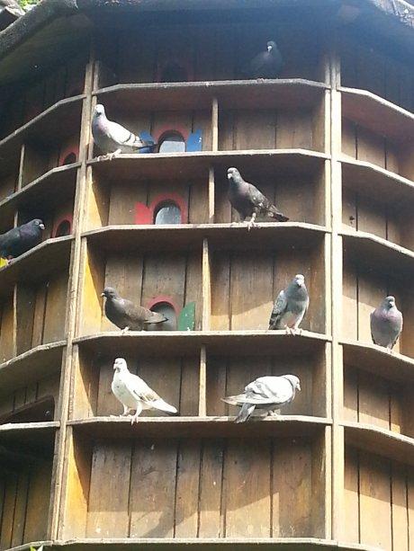 Lutherpark Witten Turm für Tauben
