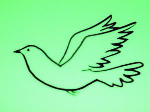 logo_stadttauben_wuppertal.jpg