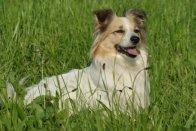 hunde_bilder_diane_063_red.jpg