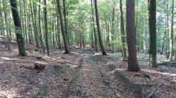 Bild vom Besuch im Wald