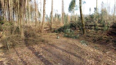 Versperrter Waldweg durch Friederike Sturmschäden