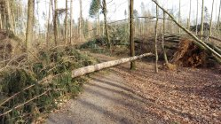 Sturmschäden im Wald durch Friederike