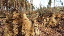 Friederike Sturmschäden im Wald