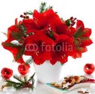 Christmas_arrangement_of_amaryllis.jpg