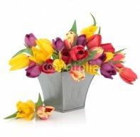 Tulip_Flowers.jpg