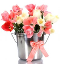 beautiful_pink_tulips_in_bucket_isolated_on_white..jpg