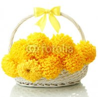 bright_yellow_chrysanthemums_in_basket_isolated_on_white.jpg