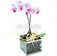 glass_vase_of_pink_orchids.jpg