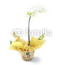 white_yellow_orchids_in_rustic_vase_floral_arrangement.jpg