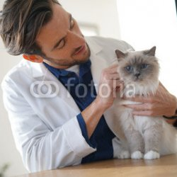 Handsome-vet-looking-at-beautiful-cat-in-vetinarian-clinic.jpg