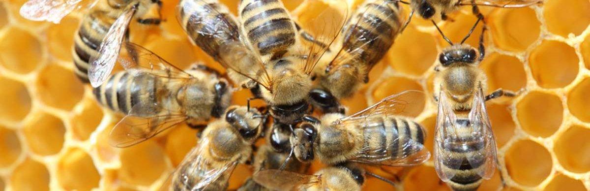 More than Honey - Mehr als Honig - Die Honigbiene in Gefahr