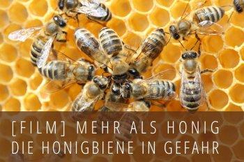 mehr als honig die honigbiene in gefahr. Black Bedroom Furniture Sets. Home Design Ideas