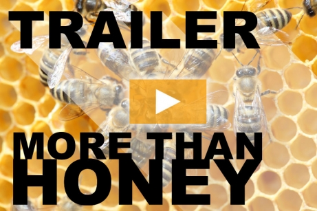 More Than Honey Stream Trailer auf Youtube