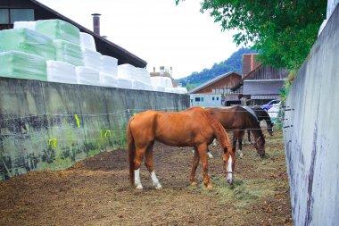 Reitstall Bürki - die schönen Pferdeweiden auf dem Anwesen