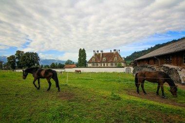 Reitstall Bürki - die Reithalle auf Schloss Oberdiessbach