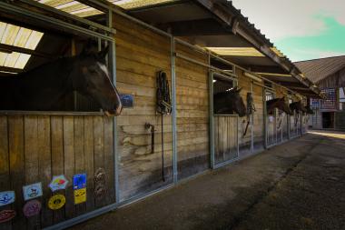 Reitstall Bürki - unsere Pferdeboxen