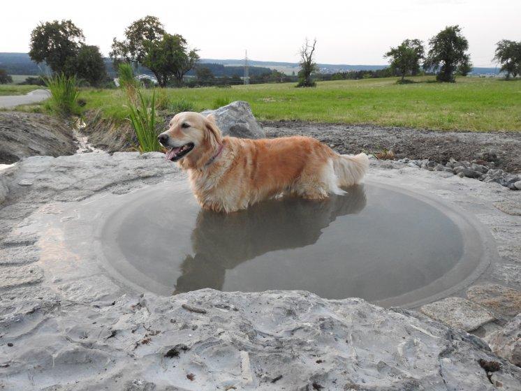 KW_15_-_Wassertretbecken-Hund.JPG