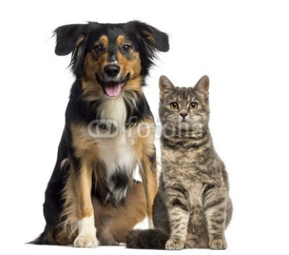 Cat_and_dog_sitting_together.jpg