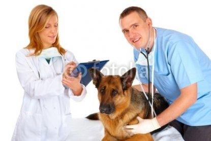 Two_vets_examining_dog.jpg