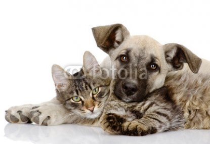 the_dog_and_cat_lie_together._isolated_on_white_background_.jpg