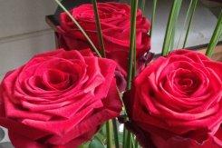 001_rote_rosen.jpg