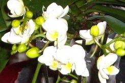 007_orchideen.jpg