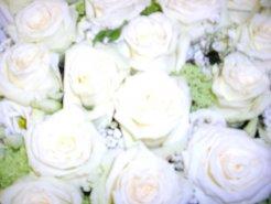 Blumen_2012-2013_121_Kopie.jpg