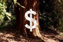 Baum-mit-Dollarzeichen300x200.jpg