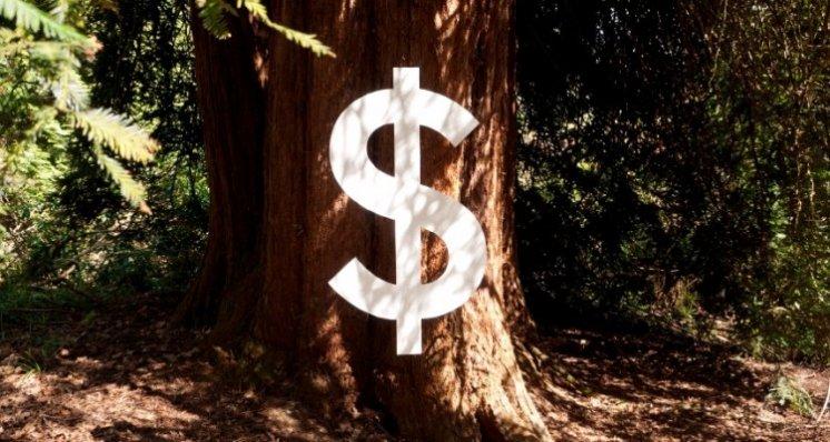 Baum-mit-Dollarzeichen750x400.jpg