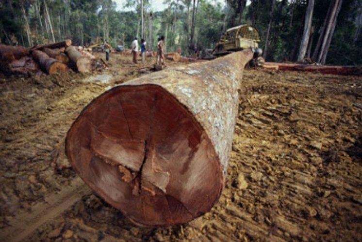 regenwald-abholzung.jpg