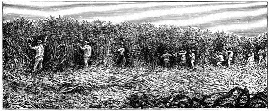 zucker-feld-1882.jpg