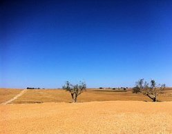 Alentejo Plains
