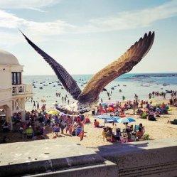 Cadiz Beach Seagull