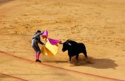 Seville Bullfight