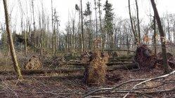 Sturmschäden Iserlohn Rheinermark in Hennen