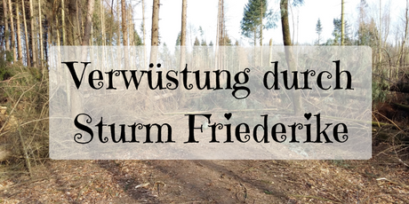Iserlohn Rheinermark Friederike Sturmschäden