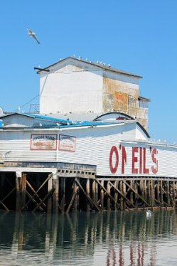 Digby Town O'Neils Fisheries