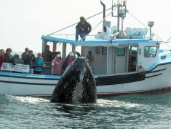 Freeport Whale & Seabird Tours Freeport