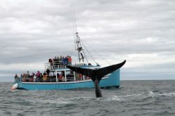 Mariner Cruises Whale & Seabird Tours Westport, Brier Island