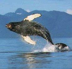 Whale Watch Bay of Fundy - Nova Scotia