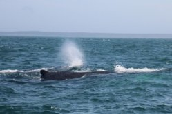 Whale Watch Brier Island Nova Scotia