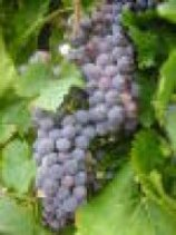Säuregehalt Wein
