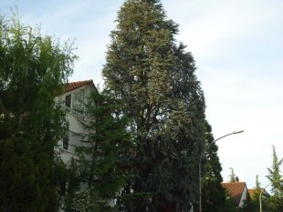 Baumpflege und Baum fällen in Stuttgart