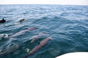 Dolphins on a bay tour in Huatulco Mexico