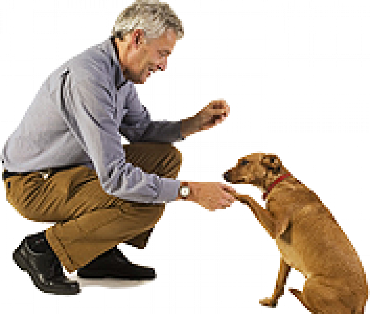 """how dogs communicate with humans They sometimes converse with humans in the same manner """"how do cats communicate with each other""""  rescued dogs' legacy endures."""