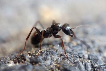 Dauerhafte Schädlingsbekämpfung