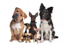 Hundeversicherung.jpg