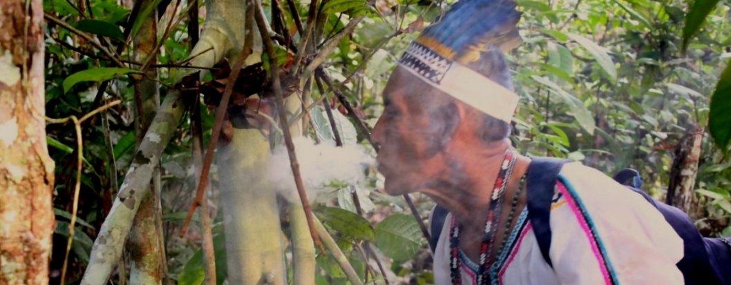 ayahuascaportal.com-plant-dieta-2.jpg