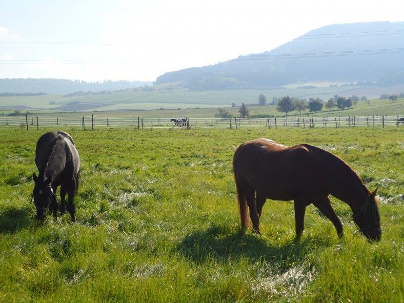 Pferde-auf-Weide.JPG