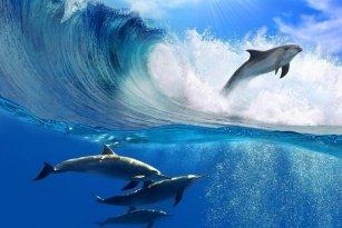 DIY-frame-Dolfijnen-Sprong-Oceaan-Golven-Dier-Landschap-Landschap-Poster-Stof-Zijde-Poster-Print-Grote-Foto.jpg_640x640.jpg